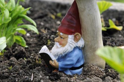 A Garden Gnome Reading A Book